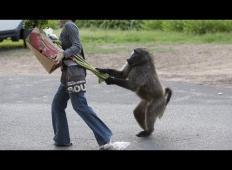 Ali meniš, da so živali nadležne? Poglej si ta posnetek.