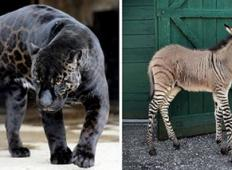 Ali te živali zares obstajajo?