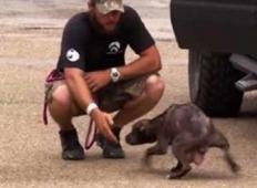 Tale psička je na nenavaden način rešiteljem pomagala, da bi našli njene kužke. Snidenje, ki vse gane do solz
