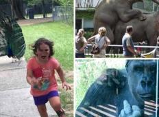 20+ primerov, ko se izlet v živalski vrt sprevrže v tragedijo